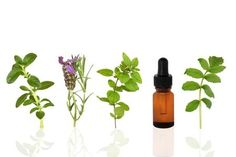 Essential oils can be used to keep lungs healthy. Read my article for information how to use the best essential oils and recipes for lung healing and treat lung infections!