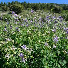 Jardín Botánico Hoya de Pedraza, Sierra Nevada, Granada. A unos 55 minutos del Valle de Lecrín, en el km 47 de la carretera a la estación de esquí Pradollano, se encuentra este magnifico jardín botánico.