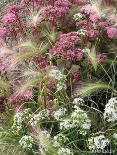 Травы, травы, травы... Мечты о прекрасном. ч.1.: Дневник пользователя stlani