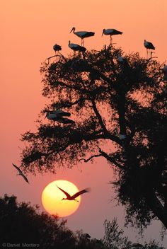 Sunset silhouette White storks at evening Beautiful Sunset, Beautiful Birds, Beautiful World, Beautiful Scenery, Cool Pictures, Cool Photos, Beautiful Pictures, Amazing Nature, Belle Photo