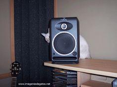 Gato se esconde detrás de un altavoz.