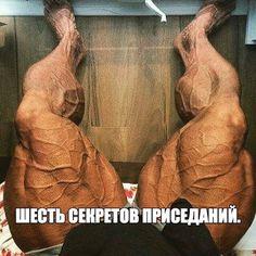 ШЕСТЬ СЕКРЕТОВ ПРИСЕДАНИЙ / Спорт Сильных!