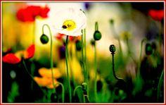 Γη και Ελευθερία.: Ανατολικά της Εδέμ. Dandelion, Poetry, Flowers, Plants, Blog, Dandelions, Florals, Blogging, Poetry Books