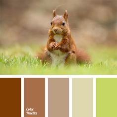 Warm shades of brown suit well for rooms that are sufficiently lit with windows facing the north side. These colours are suitable for living room, study, k.