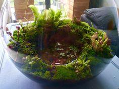 Carnivorous plants terrarium #aviariesideas