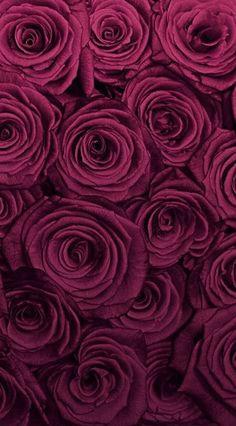 Wallpaper Nature Flowers, Beautiful Landscape Wallpaper, Beautiful Flowers Wallpapers, Flower Phone Wallpaper, Beautiful Rose Flowers, Flower Wallpaper, Apple Logo Wallpaper Iphone, Wallpaper Iphone Cute, Galaxy Wallpaper
