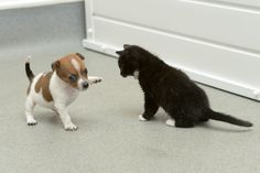 High-fiving together. | A Rejected Puppy And An Abandoned Kitten Adopt Each Other