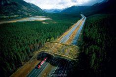 Uma ponte apenas para criaturas silvestres, Canadá