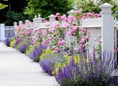 Image result for boxwoods with roses and salvia
