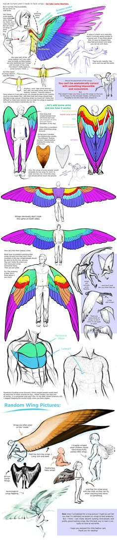 This is a good explaination of the correct anatomy of wings on people. Technically, winged people shouldn't have arms, but it would be pretty hard how to do something.
