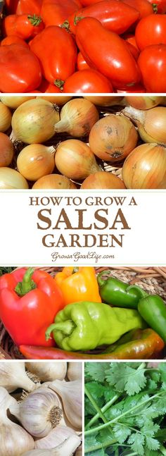 If you enjoy eating fresh salsa in the summer, growing a salsa garden will provide you with the fresh ingredients you need to whip up salsa at a moments notice. Includes a garden plan for a 4x4 raised bed or square foot garden.