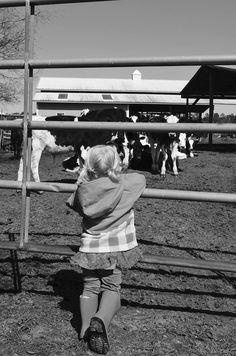 Talking with the cows is a popular pastime at Minerva Dairy
