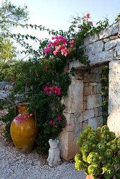 Bougainvillea growing up stone wall - Il Collegio, Puglia, Italy