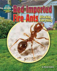 Red Imported Ants: Attacking Everything