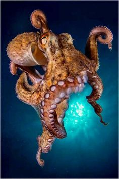58Octopus Photography