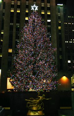 new york christmas tree   dec 2012