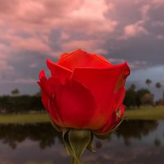 #rawpicture #noedit #rose #sunset #mybackyard #wellington #florida #fl #boricua #mylife #lake #happyfriday #itsfriday #happy #jibarosenlaluna #sky #clouds #spring #equestrianneighborhood
