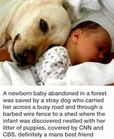 Newborn Baby Saved By Stray Dog quotes cute animals baby dog amazing story animal stories heart warming