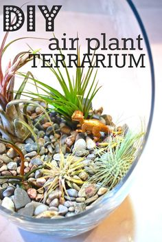 Easy DIY Air Plant Terrarium via http://lifeovereasy.com/ #diy #cheap