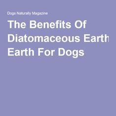 The Benefits Of Diatomaceous Earth For Dogs