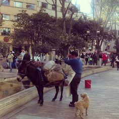 Lo que uno se encuentra en lebo centro de #Bogota.  #urban #urbano #bogotacity