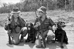 Tracker dogs, 1967 -- South Vietnam    Two black Labrador dogs which had a lot of sniffing to do during Operation Lismore that was completed by 7th Battalion, The Royal Australian Regiment (7RAR). The dog handlers are 19983 Private (later Lance Corporal (L Cpl)) Thomas Douglas (Tom) Blackhurst of Swansea, NSW (left), with Justin and 43921 L Cpl Norman Leslie (Norm) Cameron of Kingston, SA, (right) with Cassius. The dogs were responsible for locating Viet Cong fighters.