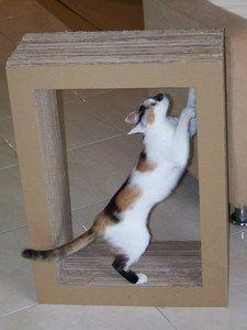 Cardboard scratching spot - easy, cheap but plenty of patience hehe