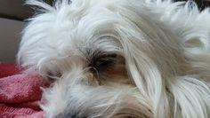 #REM Los perros también sueñan  #CocoDog https://video.buffer.com/v/582c39afbee212f041a9ea29