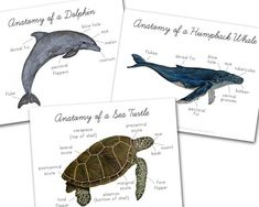 Cursive Letters Chart, Cursive Alphabet, Butterfly Life Cycle, Nature Study, Humpback Whale, Dolphins, Watercolor Paintings, Digital Prints, Turtle