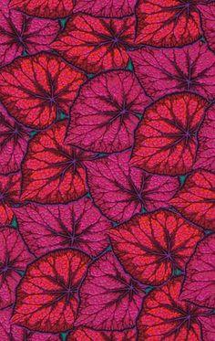 Philip Jacobs. Begonia Leaves magenta