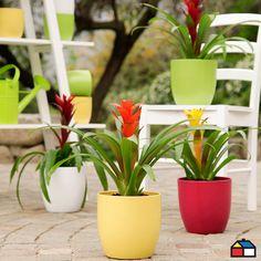 #Maceteros modelo Basel #Colores #Jardin #Terraza Planter Pots, Colorful, Model, Floral Arrangements, Container Plants, Decks, Green, Plants, Plant Pots