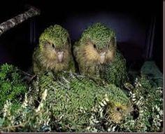 New+Zealand+Amazing+Animals | Amazing Pictures of Animals photo Nature exotic funny incredibel Zoo ...