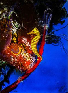 Seahorse in coral reef