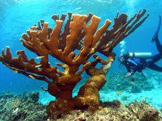 Dive UTILA AGGRESSOR, Honduras -- with U.S. Dive Travel.