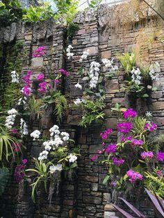 Daniel Stowe Botanical Garden is the perfect one-day cure for jet lag - Charlotte Agenda Orchids Garden, Garden Trees, Cacti Garden, Backyard Vegetable Gardens, Garden Landscaping, Vertikal Garden, Japanese Garden Landscape, Orchid House, Vertical Garden Wall