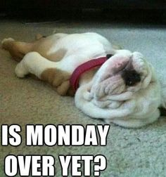 50 Funny Monday Quotes - Yes it's Monday again! Monday's can be rough but we have 50 funny Happy Monday quotes to brigh - Monday Humor Quotes, Frases Humor, Funny Quotes, Dog Quotes, Animal Quotes, Funny Memes, Baby Animals, Funny Animals, Cute Animals