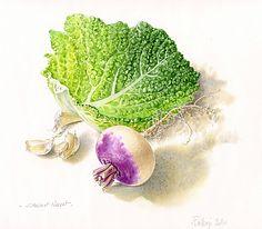 chou-et-navet. Vegetable Illustration, Garden Illustration, Botanical Drawings, Botanical Prints, Emotional Drawings, Illustration Botanique, Watercolor Fruit, Plant Art, Illustrations