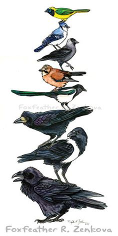 A beautiful, whimsical painting of a 'totem pole' of corvids - stacked one on top of the other!  Each of the birds represents a different species from the family Corvidae (by Foxfeather Zenkova | Foxloft Studios). From top to bottom: Green (Inca) Jay, Blue Jay, Jackdaw, Eurasian Jay, Magpie, Rook, Pied Crow, and Raven.