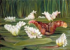 A South African Water-Plant in Flower and Fruit by Marianne North; c. 1882; Oil on board; Collection: Royal Botanic Gardens, Kew, England