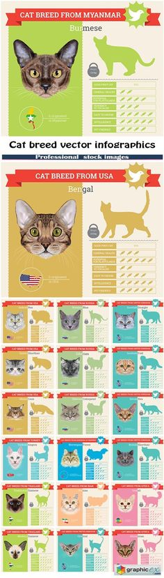 Cat breed vector infographics