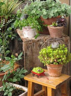 Adorable succulents and other beautiful potted plants. check out the mini radio flyer wagon!