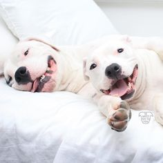 The Whitest Pups You Know