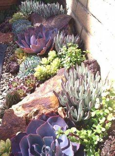 52 Ideas Succulent Garden Landscape Design For 2019 Succulent Rock Garden, Succulent Landscaping, Landscaping With Rocks, Landscaping Plants, Front Yard Landscaping, Succulents Garden, Landscaping Ideas, Succulent Planters, Hanging Planters
