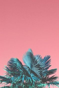 Pink Tropical sky | Blue Palm leaves | Pink and Blue | Inspiration for Livingetc Topics decorating feature | March 2016