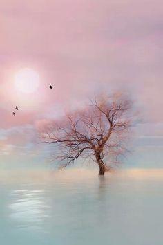 Tree iPhone Wallpaper Download |