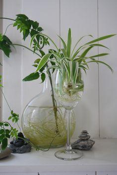 Urban Jungle Bloggers: Give a Friend a Plant via @floralist