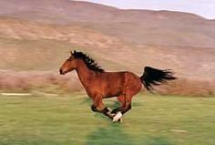 ... run with the mustangs!  Truth is, if they must be captured and sold, I would love to own and train one!