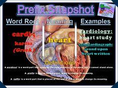 cardi- Prefix Snapshot