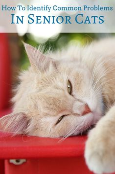 Signs and symptoms associated with senior cats may be subtle and difficult to notice... Here are some of the most common problems seen in senior cats!
