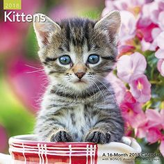 Decorate your planning space with these adorable kittens! Buy your 2018 Kittens calendar from Purrfect Gifts Online today! Cat Lover Gifts, Cat Gifts, Cat Lovers, Tiny Kitten, Kitten Love, Kittens Cutest, Cats And Kittens, Cat Calendar, Calendar 2018